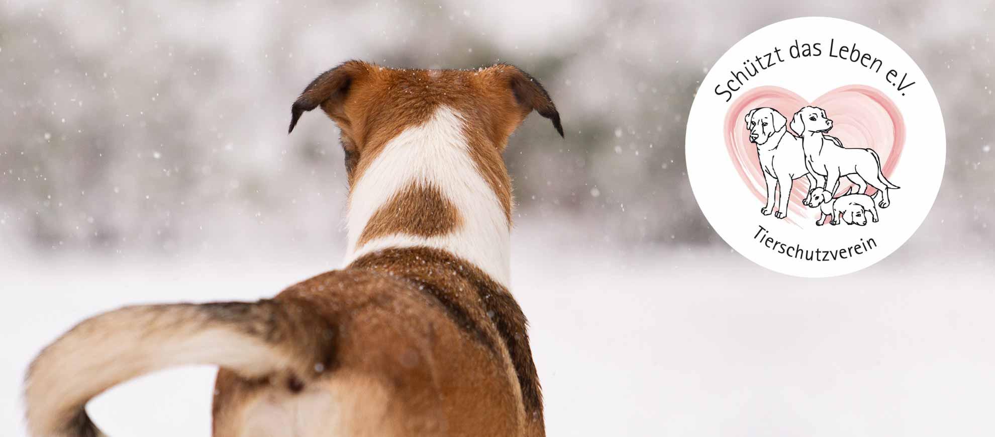 Hund steht mit Rücken zum Betrachter und schaut gespannt in die verschneite Landschaft