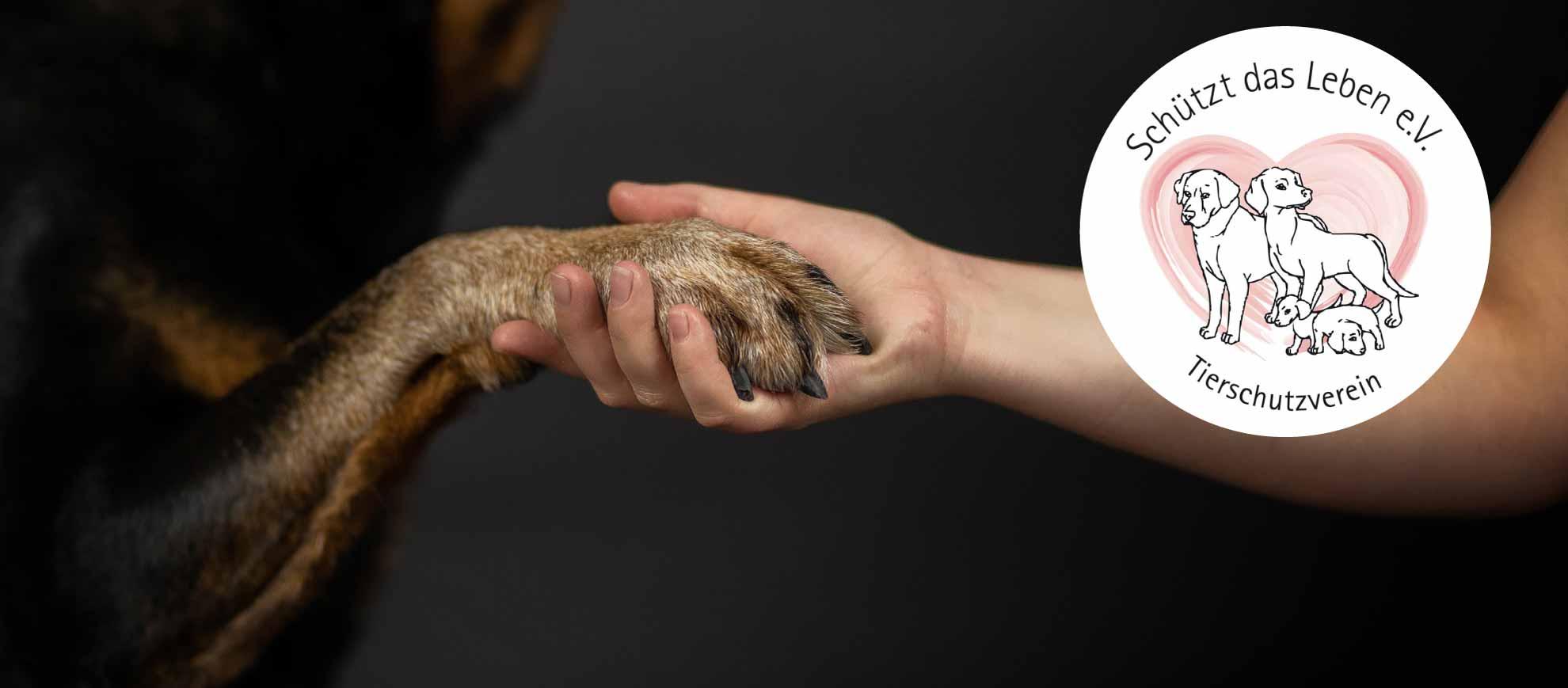 Hundepfote liegt in Menschenhand als Symbol für Kontakt und Vertrauen