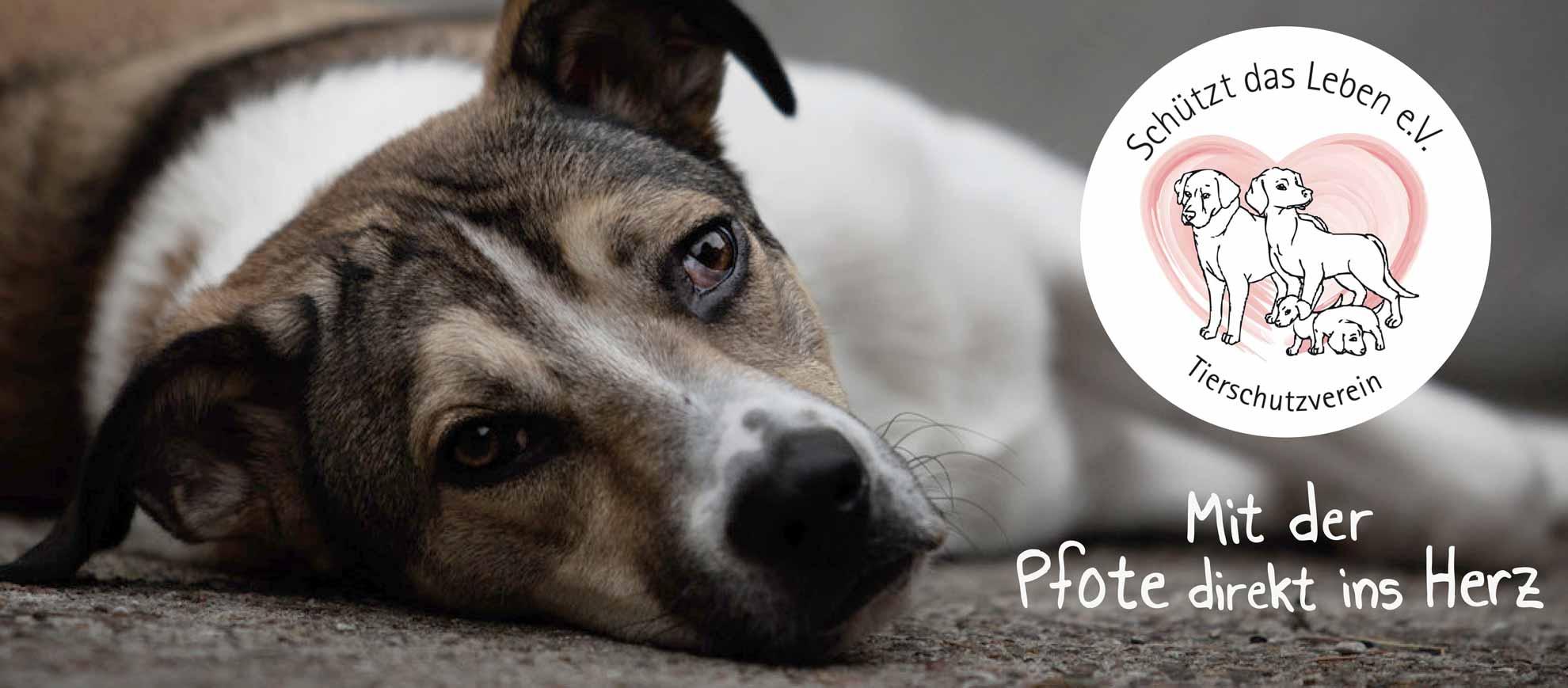 Hund liegt seitlich auf dem Boden, dazu der Spruch Mit der Pfote direkt ins Herz, Logo vom Tierschutzverein Schützt das Leben e.V.